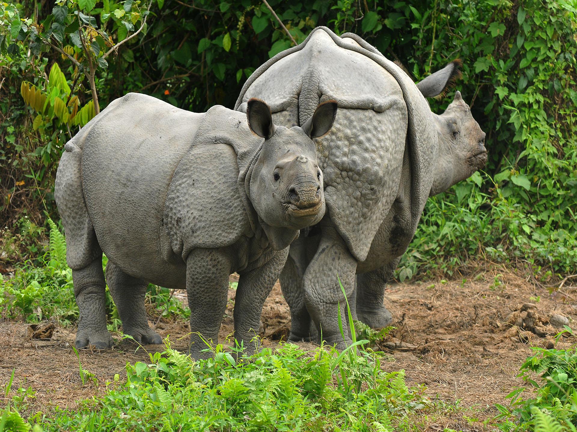 rhino-at-manas_2-2