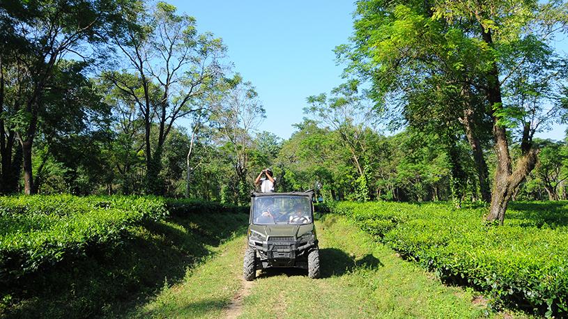 tea-garden-2-pkd_2115